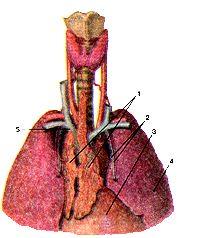 Анализ крови при тромбофлебите  Лечение Сердца