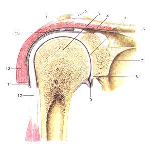 гельминты воспаление суставов