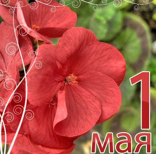 http://priroda.inc.ru/prazdnik/1maja/gif/56068.jpg